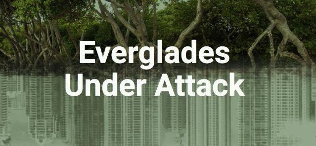 Everglades Under Attack